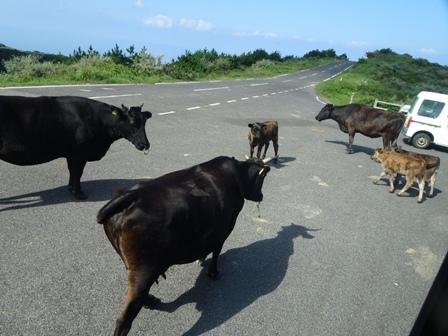 お出迎え牛の一家の.JPG