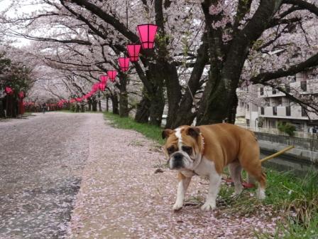 ではない日本の犬.jpg