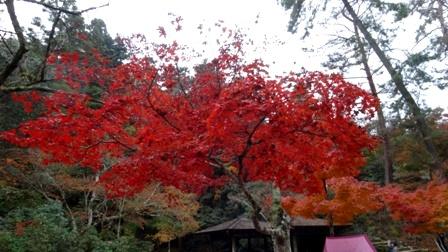 の赤紅葉谷.jpg