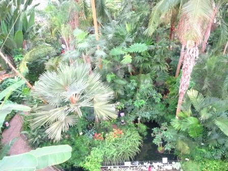 ジャングル.jpg