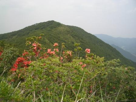 ネコ山.jpg