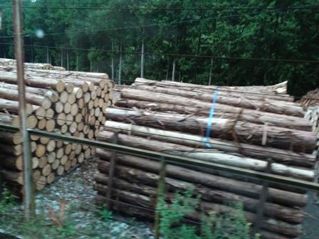 ヒノキの材木.JPG
