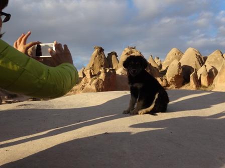ラクダ岩の犬.jpg