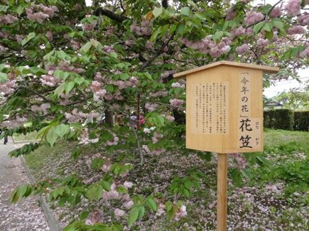 今年の花.jpg