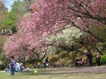 公園花見.jpg