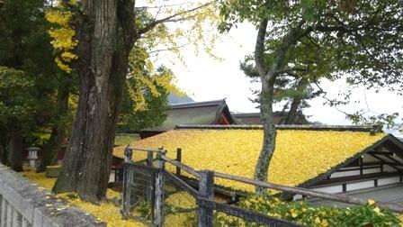 屋根黄金の.jpg