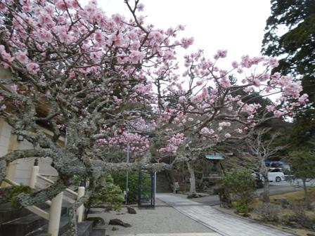 山頂の寺.JPG