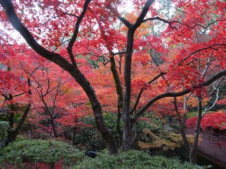弥彦公園紅葉園.JPG