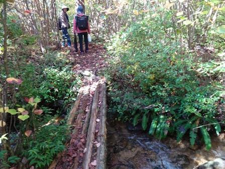 木の橋.JPG