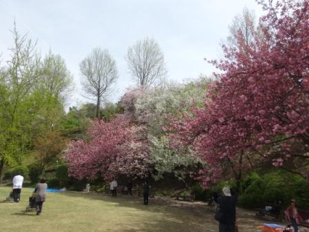 桜競演.jpg