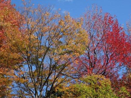 植物公園の秋.jpg