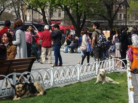 犬アヤソフィアの.jpg