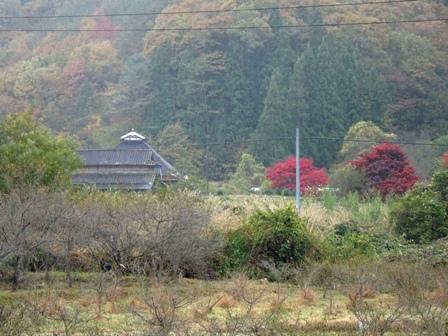 田舎の紅葉.JPG