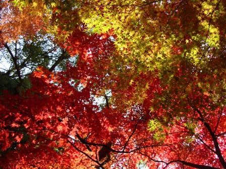 紅葉のぐらディエー.jpg