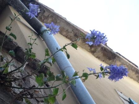 紫花.jpg