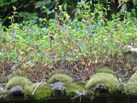 苔むす屋根.jpg