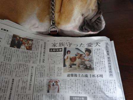 迷い犬.jpg