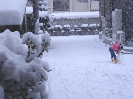 雪やこんこん.JPG