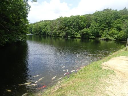 鯉が窪の池.JPG