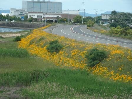 黄色い河川敷.JPG