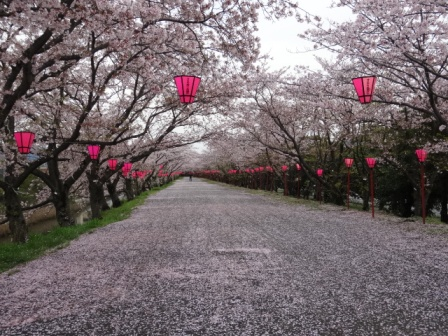 1ピンクの道.jpg