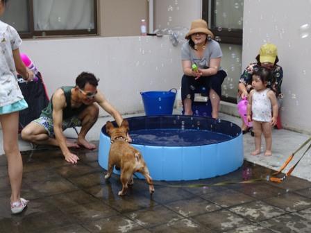 1家庭用プール.JPG