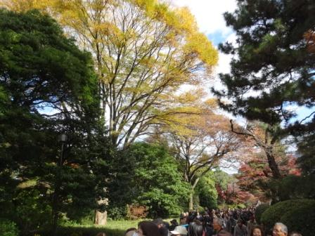 1皇居の秋.JPG