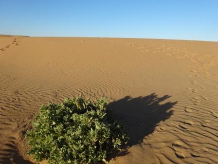 1砂漠の植物.JPG