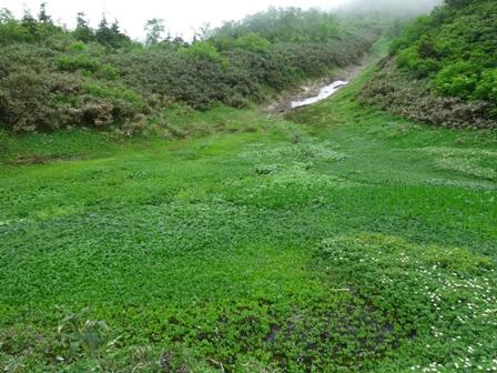 1雪渓の湿原.jpg