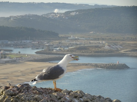 2ナザレ海岸.JPG