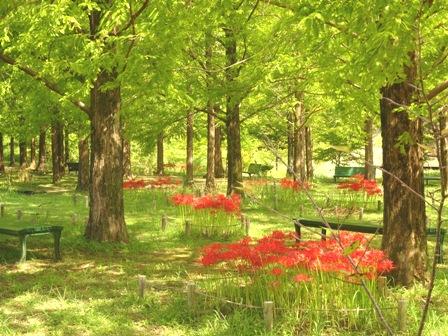 2モネの庭.JPG