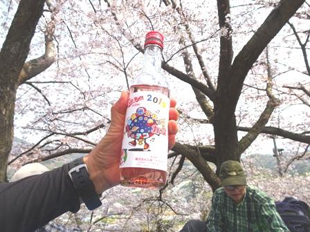 2千本桜.JPG