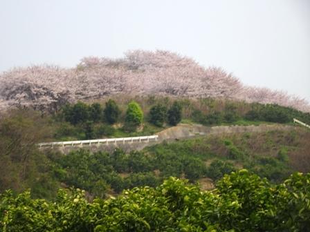 4千本桜.JPG