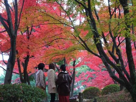 5縮景園.JPG