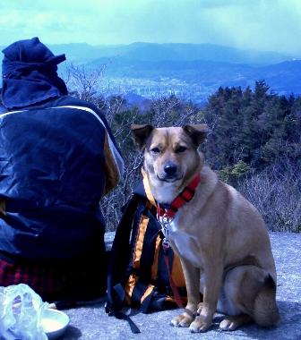バクチ岩の犬